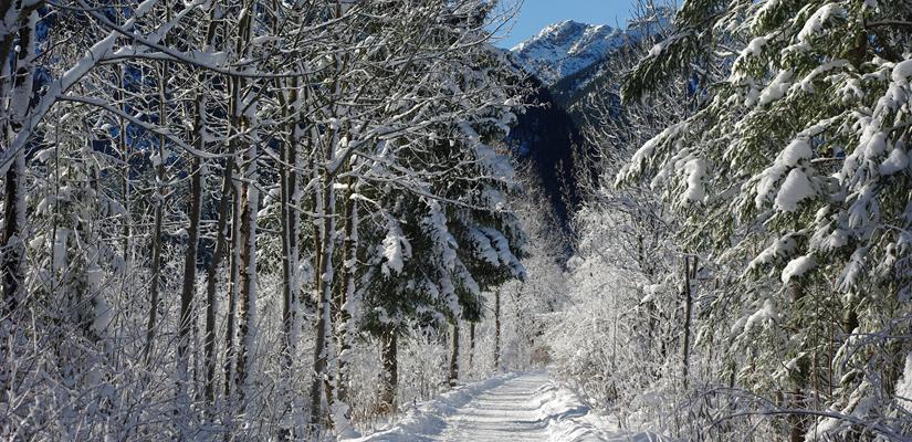 wanderweg im schnee